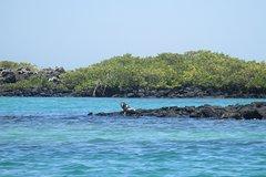 Imagen 5- Day Santa Cruz Galapagos Island Hopping Express
