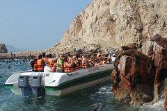 Imagen Ballestas Island Tour Sightseeing Boat