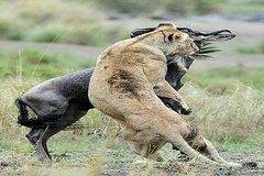 4 Days 3 Nights Serengeti and Ngorongoro Crater
