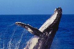 Actividades,Actividades,Actividades acuáticas,Actividades acuáticas,Salidas a la naturaleza,Deporte,Crucero por Sídney