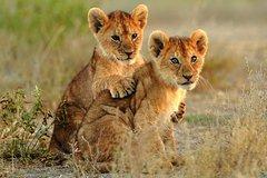 3-Day Kruger Explorer Safari from Johannesburg