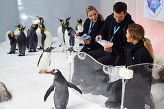Imagen Penguin Passport at SEA LIFE Melbourne Aquarium