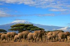 2 Days Amboseli Wildlife Safari kenya