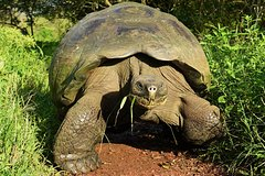 Imagen The Best of Galapagos Adventure in 7 Days