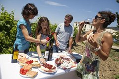 Private 7-Hour Tour of Three Etna Wineries with Tasting from Syracuse