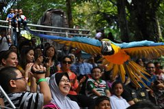 Imagen Kuala Lumpur Bird Park Admission Tickets & Free Shopping Tour