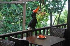 Imagen Kuala Lumpur Bird Park Admission Tickets With Free City Tour