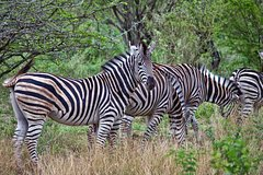 Budget 2 Night and 3 Day Kruger Park Safari Package
