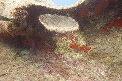 Advance Open Water Diving