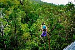 Imagen Gold Coast to Treetop Challenge and Thunderbird Park