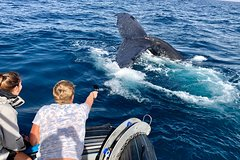 Whale Watching Adventure - Small Boat - Private Atmosphere