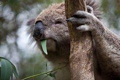 Imagen Phillip Island Koala Conservation Centre: Entry ticket