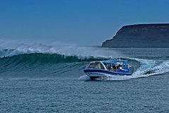Imagen Phillip Island Wildlife Cruise with Optional Penguin Parade and 3 Park Pass