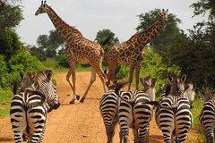 3 Days Camping and Lodging Safari