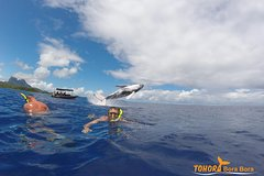 Whale Watching Tours in Bora Bora