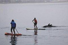 Namventures Stand-Up Paddle Board Rental