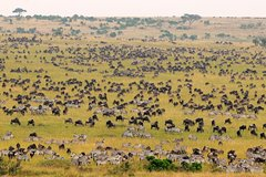 2-Day Masai Mara Overnight Safari