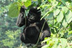 3 Day Gorilla Trekking Budget Safari in Uganda