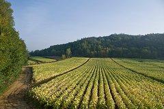 Rome - Frascati: Private Wine Tasting Tour