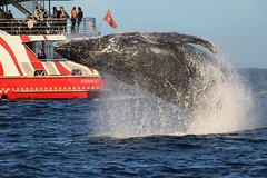 Imagen Sydney Whale-Watching Cruise from Circular Quay or Darling Harbour