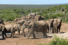 Addo Elephant Morning Safari (Half Day)