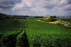 Roman Countryside Vineyards Tour in Rome with Wine Tastings