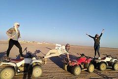 safari Full Day