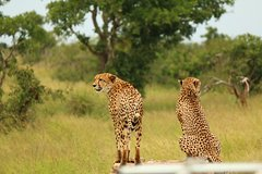 13-Day Kruger Swaziland and Drakensberg Adventure Camping Tour from Pretoria