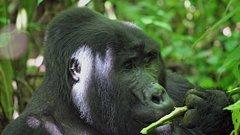 3 days Bwindi Gorilla Safari