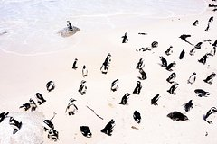 ALL INCLUSIVE Cape Of Good Hope and Penguins Boulders Beach Luxury Private Tour