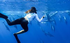 Honolulu Hawaii Oahu Snorkel Cruise: Swim with Dolphins and Turtles in the Wild 18676P1