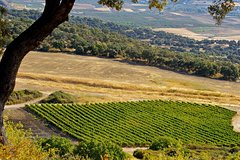 Imagen Malaga Shore Excursion: Private Winery Tour with Wine Tasting and Tapas in Ronda