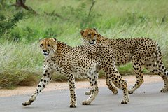 9-Day Kruger and Vic Falls Small Group Safari from Pretoria