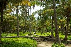 5 days Minca Tayrona Park Cabo San Juan and Playa Cristal