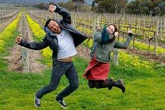 Mclaren Vale Luxury Full Day Small Group Wine Tour
