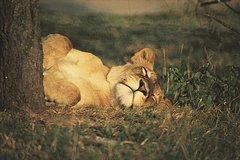 4-Day Kruger Safari Adventure Camping Tour from Pretoria