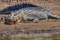 1-Hour Daintree River Crocodile and Wildlife Cruise