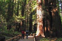 Ver la ciudad,City tours,Actividades,Activities,Actividades de aventura,Adventure activities,Salidas a la naturaleza,Nature excursions,Excursión a Muir Woods,Excursion to Muir Woods,Excursión a Sausalito,Excursion to Sausalito