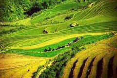 3-day trekking in Sapa Hoang Lien National Park