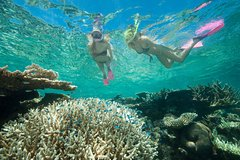 Great Barrier Reef Diving and Snorkeling Cruise from Cairns