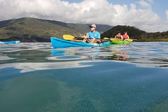 Kayak Turtle Tour from Palm Cove