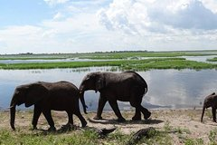 Hwange safari Daytrip