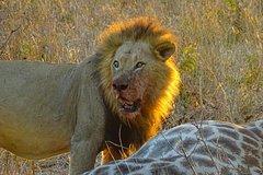 Chobe Safari Day Trip from Vic Falls