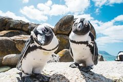 Cape of Good Hope and Penguins Tour