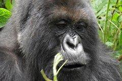 3 Day Gorilla Experience