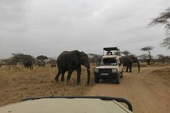 12 Days Amazing Tanzania Wildlife and Cultural Experience