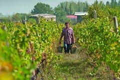 Land of Wine Kakheti