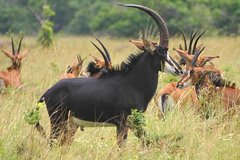 4-Day Wildlife Safari in Ruaha National Park