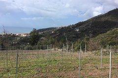 Wine tour Bonassola - Visit an organic vineyard