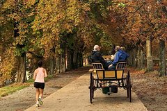 Carriage tour on the Renaissance walls of Lucca